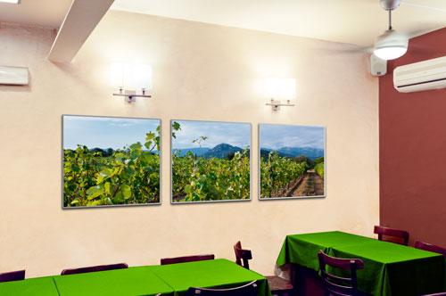 Vineyard photographs triptych